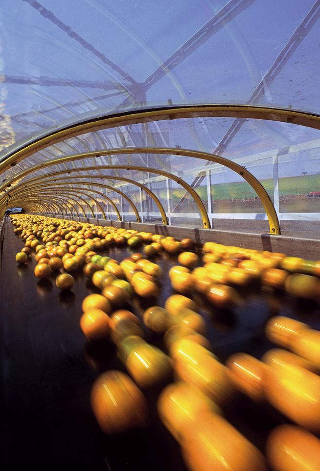 Budowanie elastycznych łańcuchów dostaw