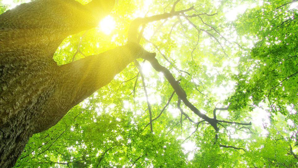 Energia relacyjna: jak zwiększać zaangażowanie wpracę?