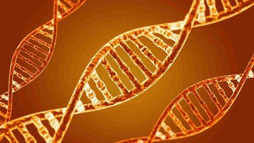 Antalis: Technologia wDNA rozwoju firmy